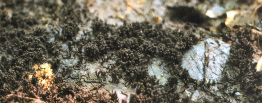moving slime mold
